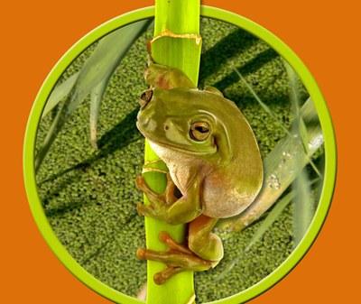 La Regidoria de Medi Ambient presenta un estudi sobre espècies protegides.